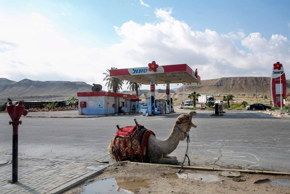 station service en Cisjordanie