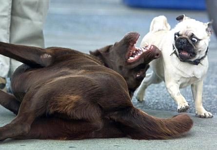 histoire de rire un peu ;) Animaux-chiens