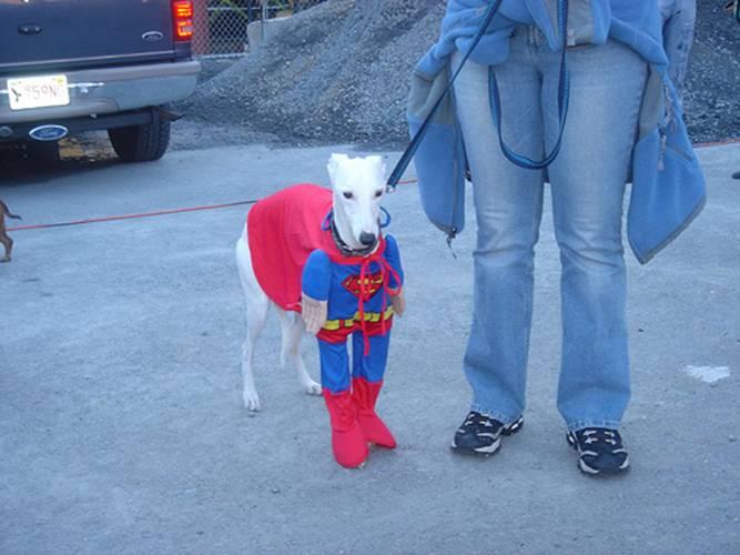 chien-superman-superdog